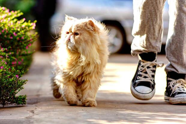 Кошки являются самыми популярными домашними питомцами в США. Так, на 88 млн кошек приходится всего 74 млн собак. (JiKang Lee)
