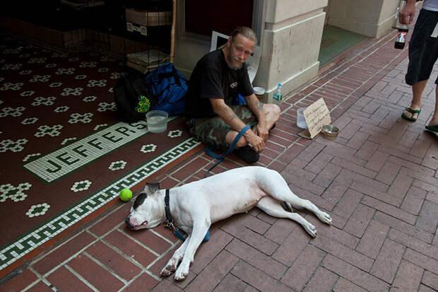 43.  бездомный, любовь, собака