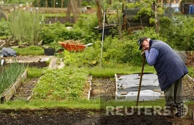 Работы в мае в огороде
