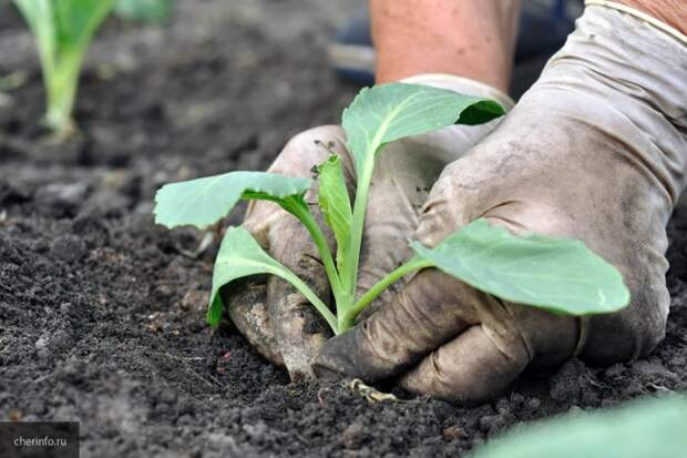 Советы для садоводов, гарантирующие отменный урожай