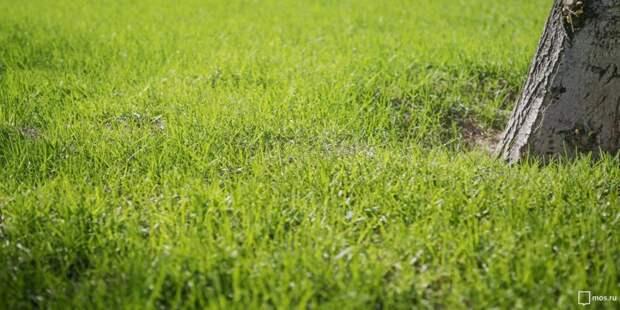 Газон в парке «Березовая роща» не косят из-за сильной жары
