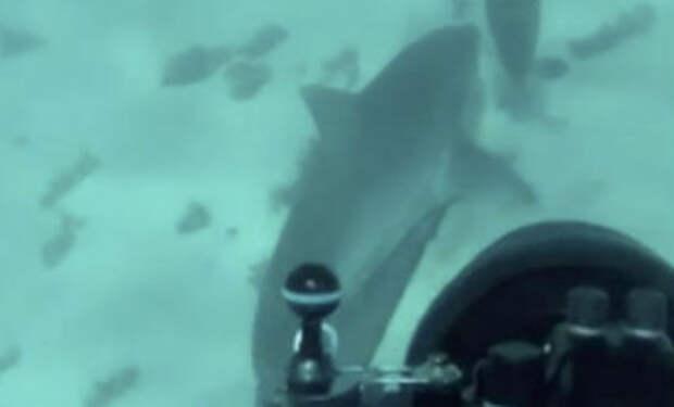 Дайвер думал, что акула вышла на охоту, но хищник пришел предупредить