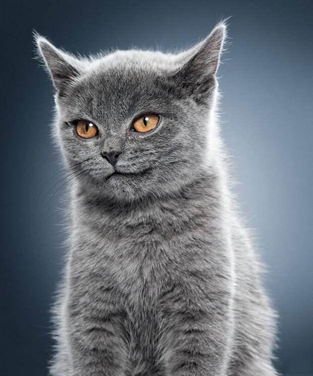 ухмылочка кошачья (581x700, 109Kb)