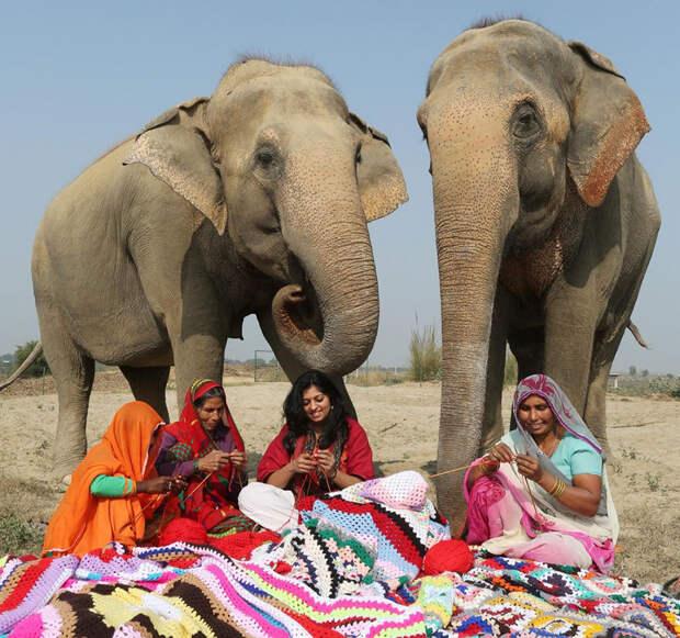 Оказывается, слоны тоже мерзнут. Мастерицы создают гигантские свитера для животных