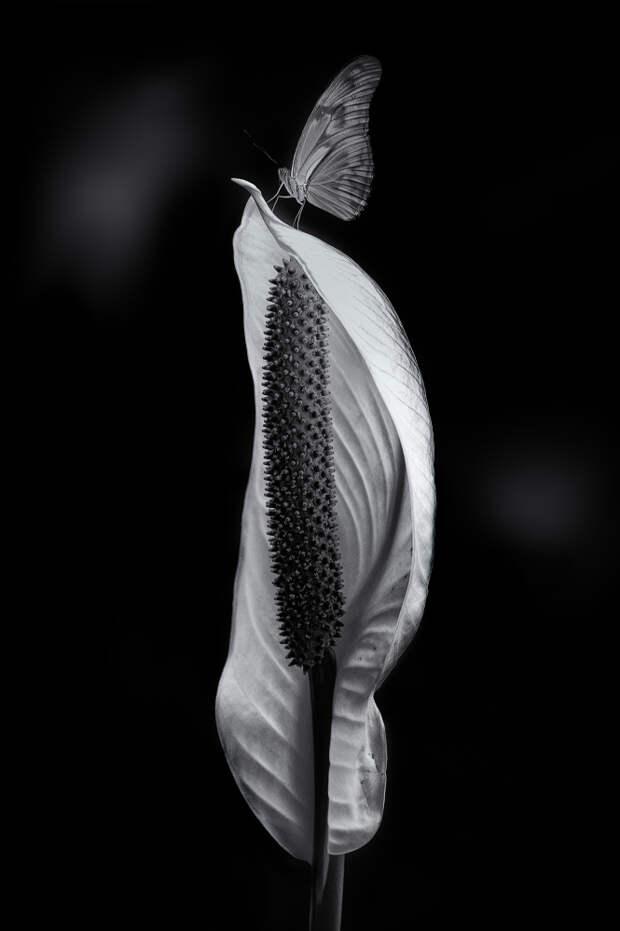 Искусство чёрно-белой фотографии Энрике Пелаэса