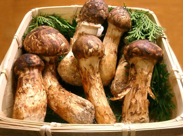 Еда, которую жадно есть. 12 самых дорогих продуктов в мире