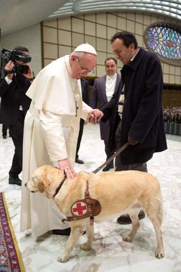 Папа Франциск говорит, что собаки тоже заслуживают того, чтобы попасть на небеса