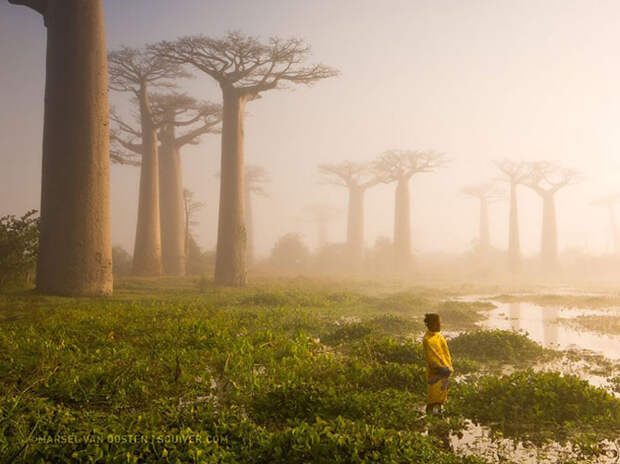 Лучшие снимки National Geographic 2015
