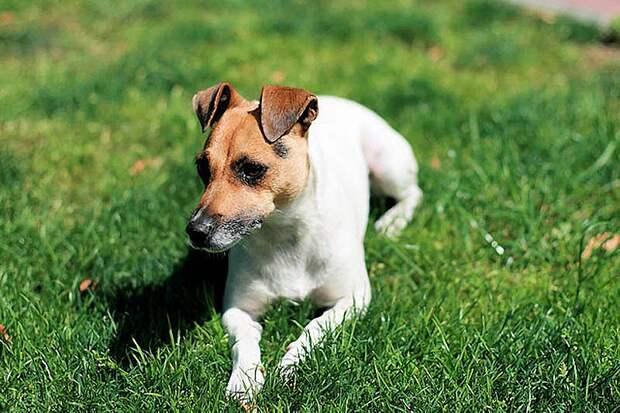 AggressiveDogs03 10 самых агрессивных пород собак
