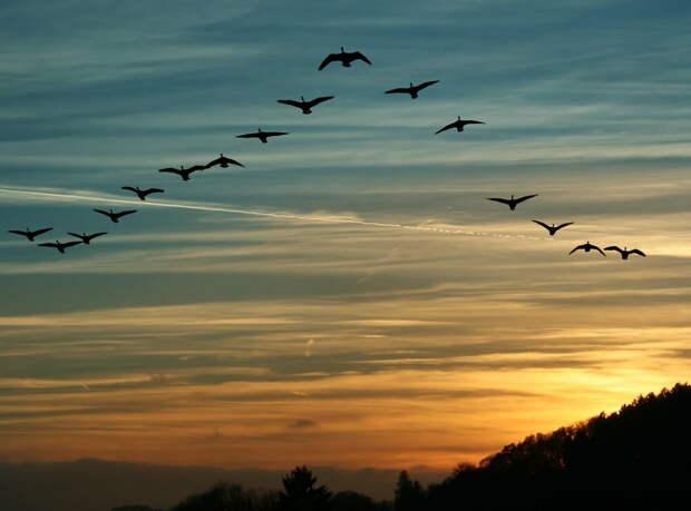Туда или сюда - летят. Неважно: жизнь продолжается