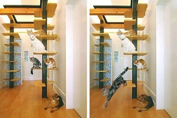 cathouse25 Дизайн для котов