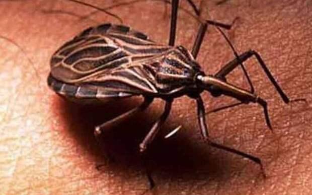 10 паразитов, которых следует опасаться летом