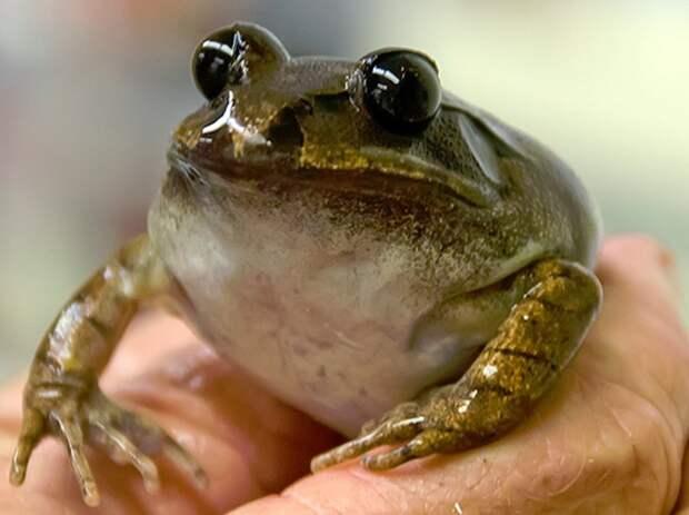 10 вымерших животных, которых собираются возродить животные, история, клонирование
