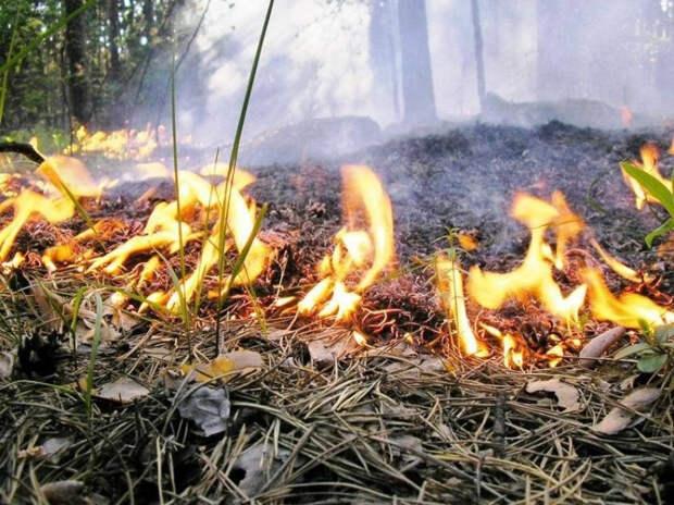 В Сочи задержали предполагаемых поджигателей леса