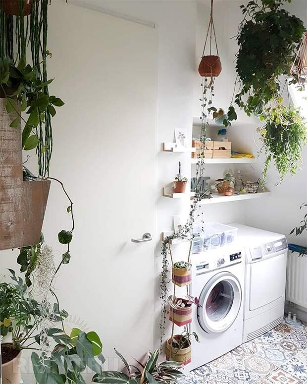 Нетривиальные способы разместить комнатные растения