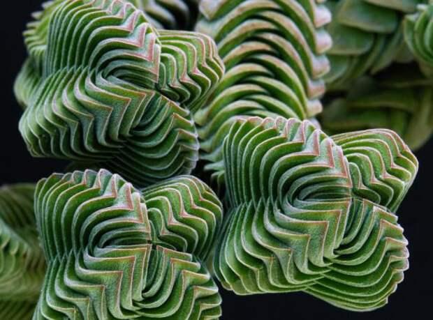 Геометрия в природе – 15 завораживающих взгляд растений