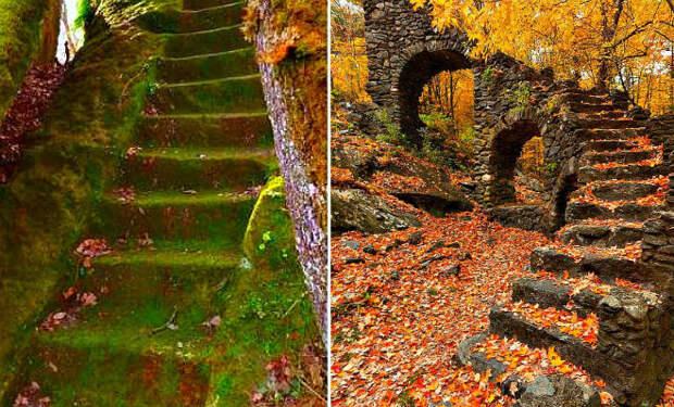 Странные лестницы ведущие в никуда: находки в чащах лесов