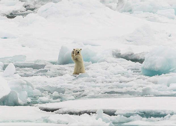 Привет из Арктики (Colin Mackenzie, Норвегия).