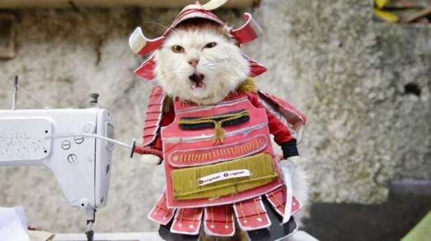 Котик-самурай
