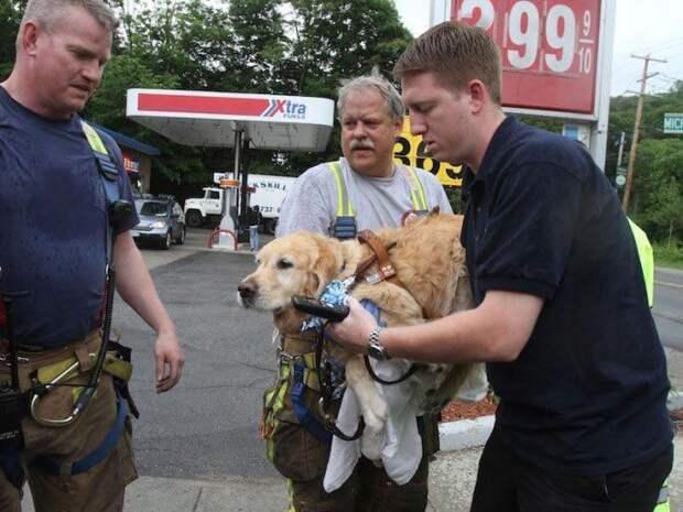 Лучший друг: собака бросилась под автобус, чтобы спасти свою слепую хозяйку автобус, собака, спасла