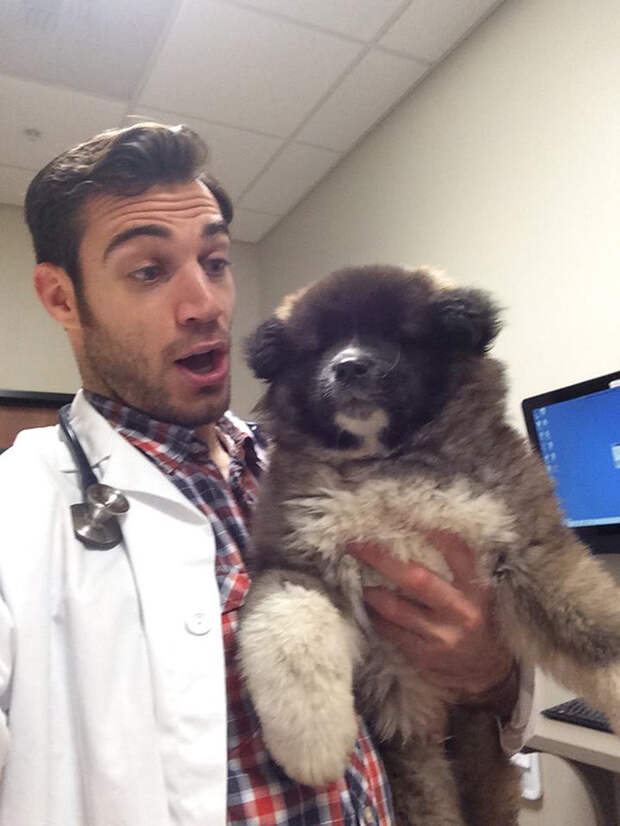 30.  ветеринар, красавец, мужчина