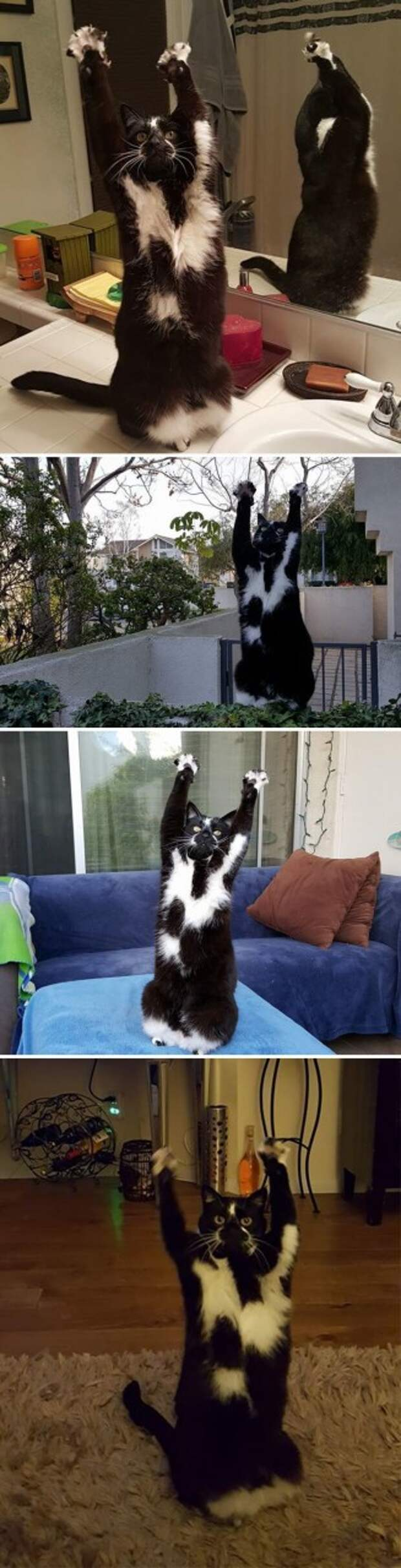 """1. """"Кот моих друзей постоянно делает вот так"""" домашний питомец, животные, забавно, кот, котики, прикол"""