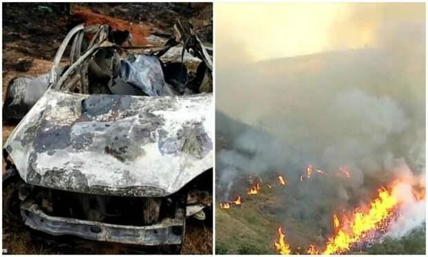 Пенсионер сжег 700 гектаров заповедного леса ипогубил сотни животных из-за страховой аферы