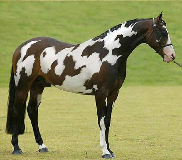 Красотка! животные, лошадь