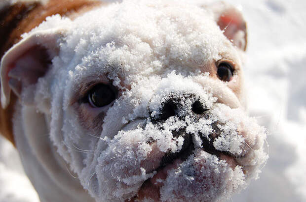 Животные, которые видят снег впервые в жизни. Эти волшебные фото подарят тебе зимнее настроение! животные, снег