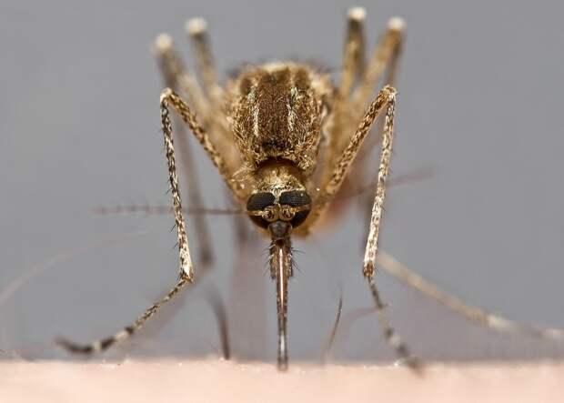 insects45 Портреты насекомых