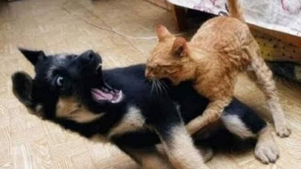 Вот почему кошки лучше собак