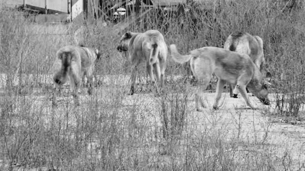 Рвут начасти: бездомные собаки держат встрахе жителей Александровки вРостове