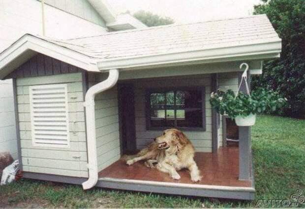 Фантазии хозяев этих собак можно только позавидовать!Посмотри и улыбнись!