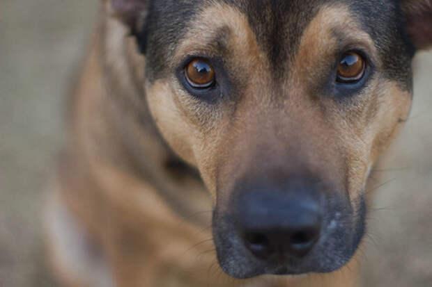Собаки животные, факты