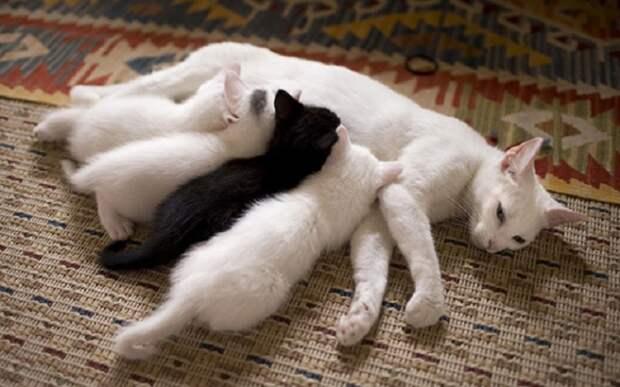 У этих котят хороший аппетит...