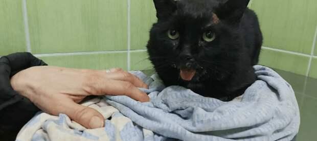 Хозяйка принесла на усыпление кота, которого обижали на протяжение последних 10 лет