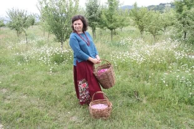 Юлия Осоргина знает, как правильно собирать целебные травы.