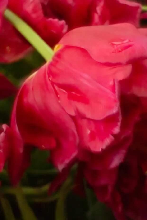 Как пчелы на яркий цветок: как обычной женщине стать обольстительной