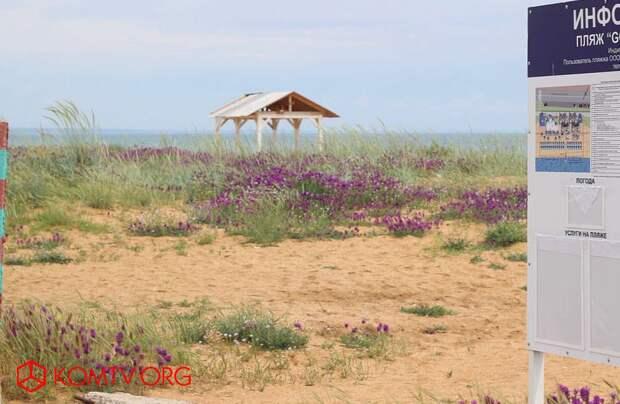 Цветущий астрагал – украшение Золотого пляжа