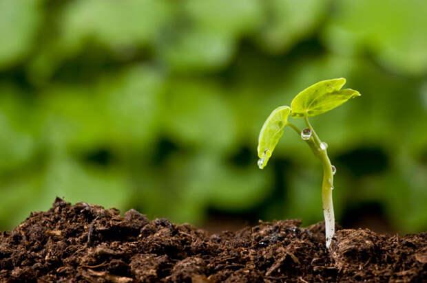 ПЛОДОП - плодородная почва для изменений Витамин Вдохновин