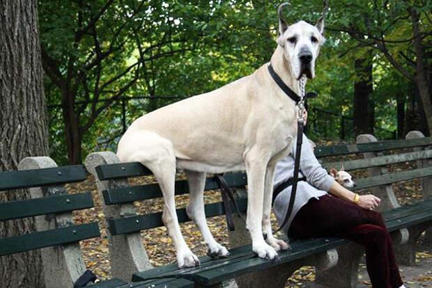 36. Просто сидим на скамейке  размер, собака