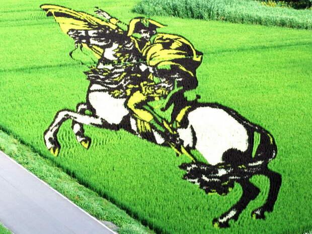 landart01 Необыкновенные картины на рисовых полях