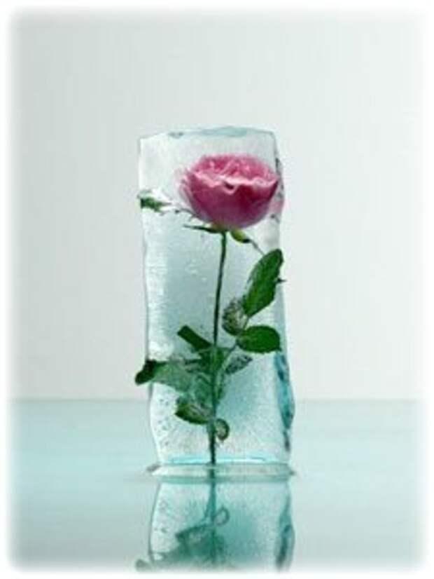 Как сделать «ледяную» розу?
