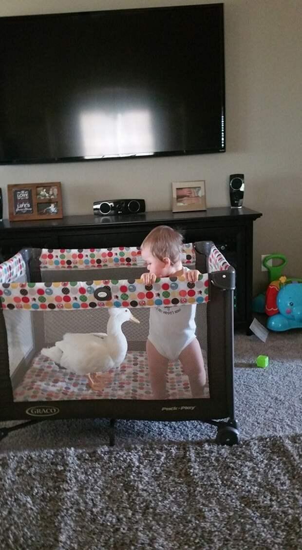 """Мама Тайлера, Дженнифер Янг, рассказала, что первым словом Тайлера было """"утка"""". дети, животные, интересное"""