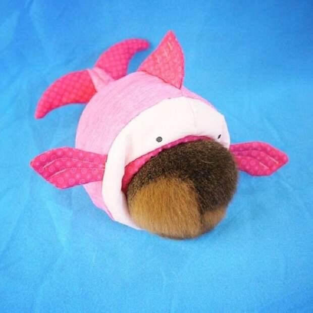 Морская свинка Фуззберта и ее невероятные костюмы