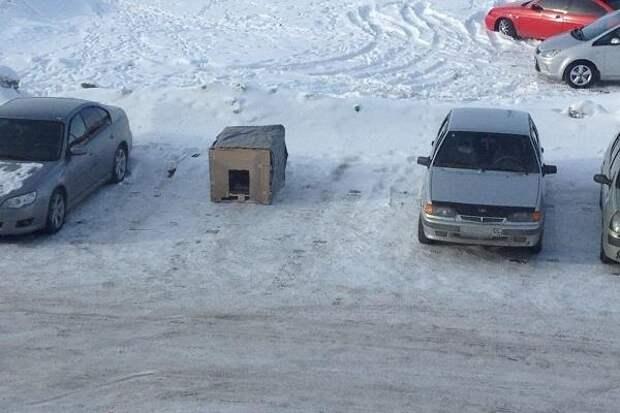 Вместо парковки - будка для бездомного пса. Новая инициатива омичей