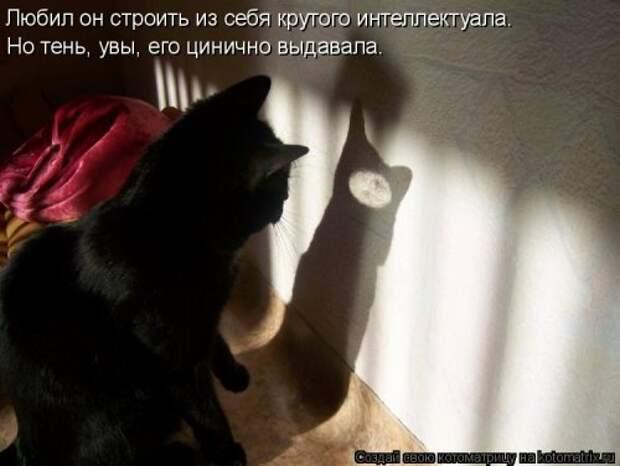 Котоматрица. Мысли вслух :)