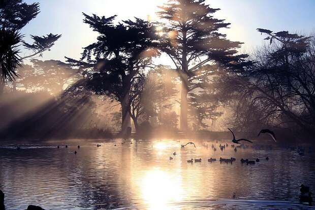 20 место. Парк «Золотые ворота» находится в Сан-Франциско и занимает площадь 4,1 квадратных километра. Его посещают 13 миллионов человек в год.