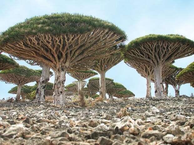 Остров Сокотра (Йемен) (1)