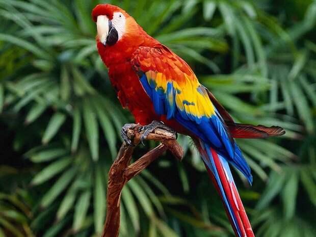 Amazonas05 Большое фотопутешествие по лесам Амазонки